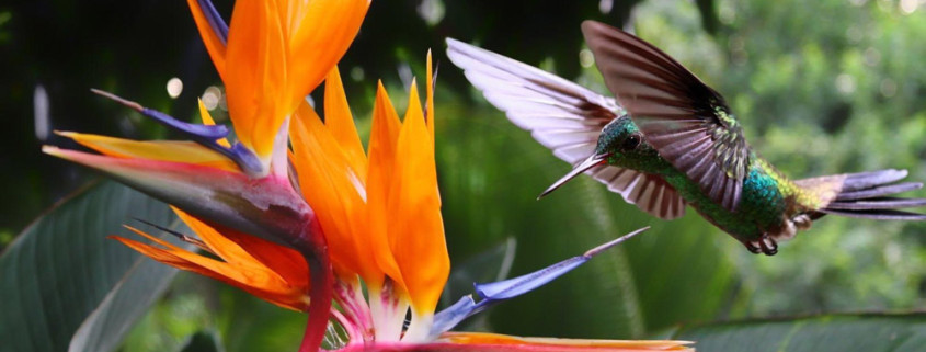 Every Body Loves, Hummingbird and Flower