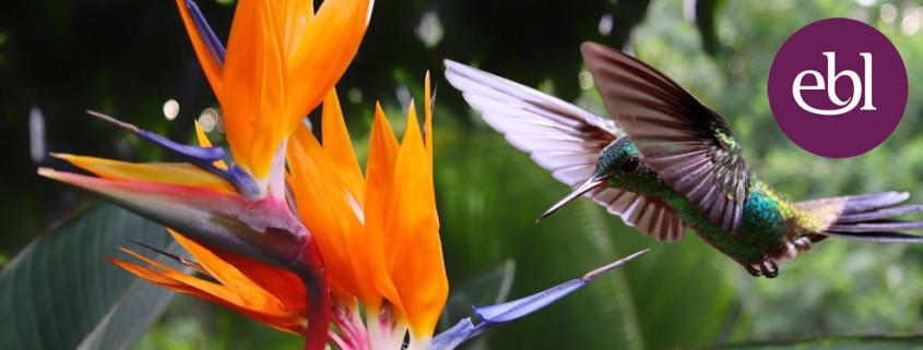 EBL Hummingbird Events